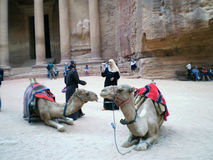 Petra camels Royalty Free Stock Photo