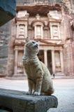 Petra de kat van de schatkist royalty-vrije stock afbeelding