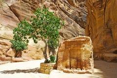 Petra en Jordania Fotos de archivo libres de regalías