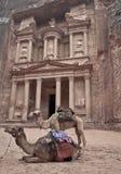 Petra en Jordania dos camellos Imagenes de archivo