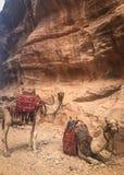 Petra Fantastiskt ställe Område för världsarv jordan royaltyfria foton