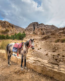 Petra horse Royalty Free Stock Photos