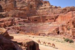 PETRA, JORDÂNIA: Camelos ao longo de Roman Theatre imagens de stock