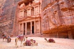 PETRA, JORDÂNIA: O Tesouraria Al Khazneh com os camelos no primeiro plano foto de stock royalty free
