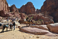 PETRA, JORDAN. APR 2, 2015: Nabataeans capital city. Unidentified local man on a camel waiting tourist. Petra's temples, tombs, theaters and other buildings Stock Photography