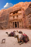 Petra in Jordan. Camels in front of the treasury or Al Khazna, it is the most magnificant and famous facade in Petra Jordan, it is 40 meters high, 2014 in Jordan Stock Images