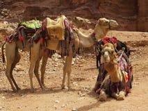 Petra, Jordan Stock Image