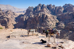 Petra, Jordan, donkeys and a dog rest on a cliff. View of the arid and wild mountain near Petra, Jordan. Donkeys and a dog rest on the border of a cliff Stock Photos
