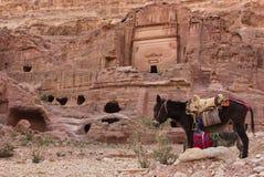Petra, Jordan. Donkeys at the Unesco world heritage site of Petra, Jordan Royalty Free Stock Photos