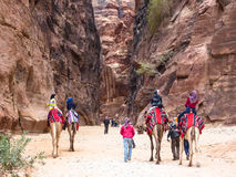 PETRA, JORDAN:Group of tourists on camels in Pet. PETRA, JORDAN:Group of tourists rides on camels, next to them are the drivers - bedouins. Camels covered with Stock Images