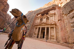 Petra in Jordan. PETRA, JORDAN - OCTOBER 12: Camel in front of the treasury or Al Khazna, it is the most magnificant and famous facade in Petra Jordan, it is 40 Stock Image