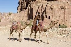 """Petra, Jordanië †""""25 December, 2015: Bedouin personenvervoer een kameel Royalty-vrije Stock Foto"""