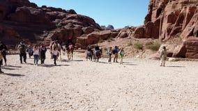 Petra, Jordanië - 2019-04-23 - de ezels van de kamelenpas in Petra stock video