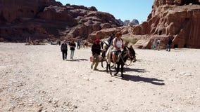 Petra, Jordanië - 2019-04-23 - de Ezels van de Toeristenrit door Petra stock videobeelden