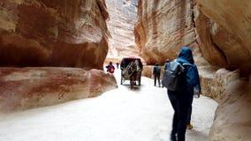 Petra, Jordanië - 2019-04-23 - paardvervoer brengt toeristen door siq 2 stock videobeelden