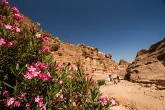 PETRA, Jordanie Image libre de droits