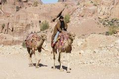 """PETRA, Jordanien-†""""am 25. Dezember 2015: Beduinischer Mann, der ein Kamel reitet Stockfotografie"""