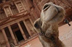 PETRA in Jordanien - der Fiskus Stockfotografie