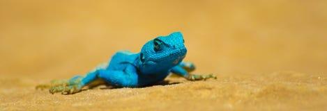 Petra lizard Stock Image