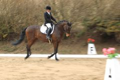 Dressage - Petra Miki Divisova Royalty Free Stock Photography