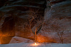 Petra at Night. Tree illuminated by candle along the trail in Petra, Jordan at night - one of most beautiful sites in middle east Stock Image