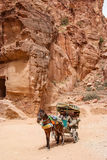 Petra siq in Jordan Stock Photography