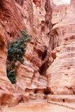 Petra skała Jordania, Zdjęcia Royalty Free