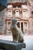 Petra treasury's cat, Jordan Royalty Free Stock Image