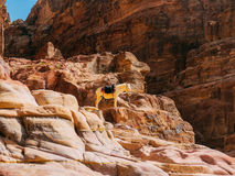 Petra View with White Donkey Royalty Free Stock Image