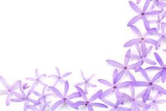 Petrea Flowers. (Queen's Wreath, Sandpaper Vine, Purple Wreath). On white Royalty Free Stock Photography