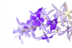 Petrea volubilis flower. Features a bouquet of purple flowers Royalty Free Stock Photo