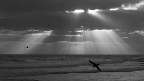 Petrels στο ηλιοβασίλεμα Στοκ Εικόνες
