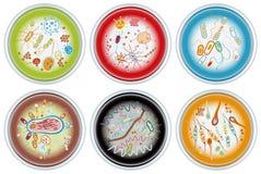 πιάτα petri συλλογής Στοκ Εικόνες