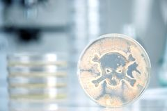 Petri dish with bacteria in the shape of a skull and crossbones stock image