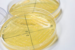 Petri dish Stock Photography