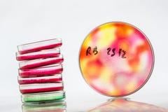 Petri dish, blood test, test-tube, syringe Stock Images