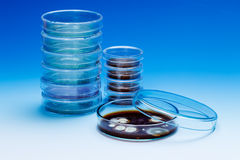 Petri dishes Royalty Free Stock Photography