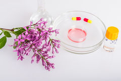 Petri dish with herbal extract for cosmetics. Royalty Free Stock Images