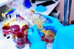 Petri Dish Microbiologisch laboratorium Vorm en schimmelculturen Bacterieel onderzoek stock fotografie
