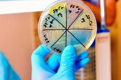 Petri Dish Microbiologisch laboratorium Vorm en schimmelculturen Bacterieel onderzoek stock afbeeldingen