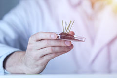 Petri dish with sprouts plants in hand Stock Images