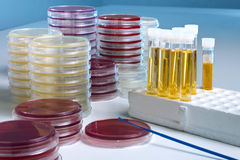 Petri dish and tubes for test of urine culture Stock Photo