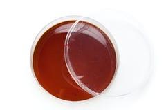 A Petri dish Stock Images