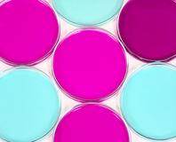 Petri dish1. Petri dish filled with colour culture media stock photos