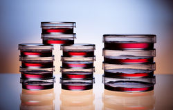 Petri dishes Royalty Free Stock Photo