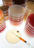Petri dishes  Stock Images