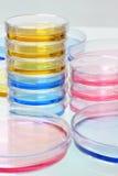 Petri Dishes Fotografía de archivo