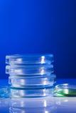 Petri Dishes Imagen de archivo libre de regalías