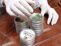 Petri dishes stock image