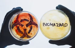 Petri dishes with biohazard word and symbol Royalty Free Stock Photo